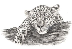 Leopard Charcoal by JenDragon