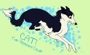 Cat! The Border Collie by Falcolf