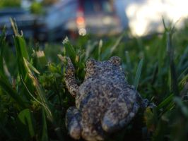 Tree Frog 16 of 24 by celticmaiden7