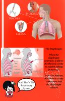 The Respiratory System Poster by ColorCodedShadow