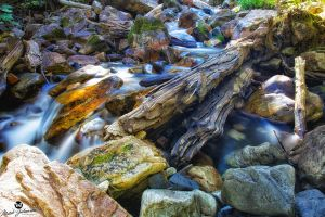 The Split Log in the River by mjohanson