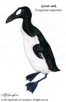 Great-auk by RSNascimento