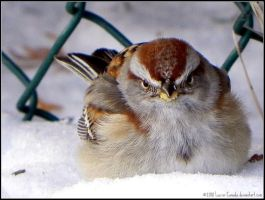 The Godfather by Lou-in-Canada