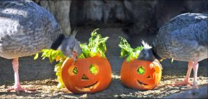 Halloween in the zoo by brijome