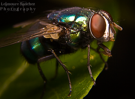 Housefly on the house 11 by lee-sutil