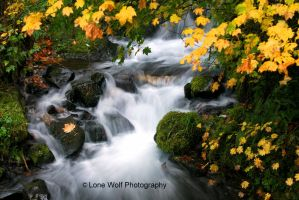 Rushing Through The Fall by LoneWolfPhotography