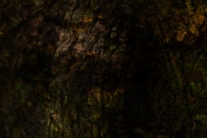 Tree texture base by SprenklePhotography
