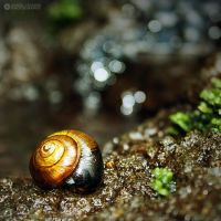 nature details 1 by adypetrisor