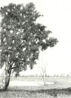 Ash Tree by aakritiarts