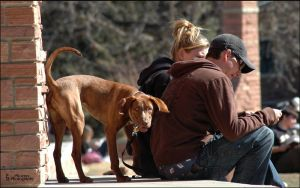 Dogs In Boulder -3 Mixed Breed by PBPhoenix