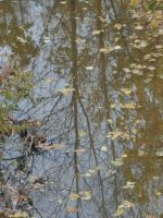 Reflections of Fall by Melanie76