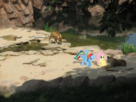 Ponies at the Zoo by Darkkon13