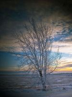 Silent Winter by WayneBenedet