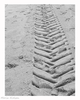 Tracks in the sand by Moonbird9
