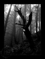 Summer 09 - Fog Bound Woods IV by OregonArtTeacher