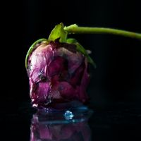 Frozen rose 2 by iPingu