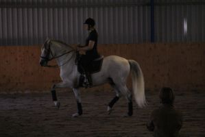 Andalusian 2 by Chance-STOCK