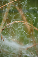 Spiderweb 02 by LapinBlancFR