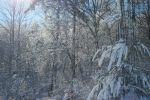 Snow day, 18 Jan 2013: icy forest by jodyjm13