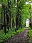 Path in green by Smile-Denise