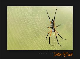 Spider by Sultan-AlZaabi