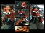 Handmade Poseable Life-sized Red fox by KaypeaCreations