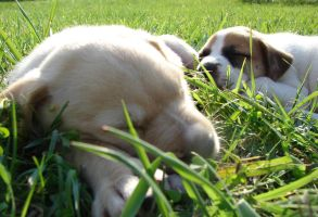 Puppies - Blondie and Bubba by Angelos-Griever
