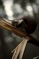 Snail by EqueL1