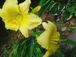 Yellow Flower (3) by LMW-The-Poet