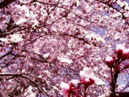 Pink spring 1 by Alicss
