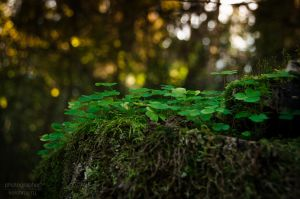 In the forest 11 by Kelshray-photo