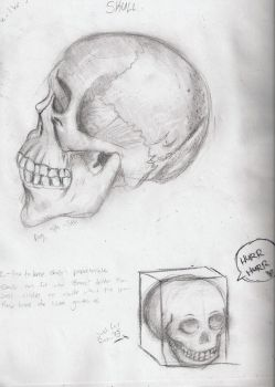 Skull Drawing by SkyTheArtist