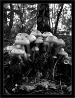 Forest mushrooms by artwebbo