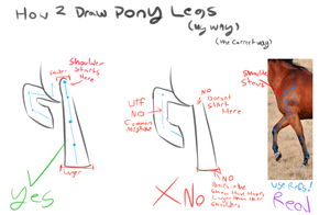 How 2 draw pony legs - A Crude Tutorial by EmilieArts