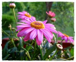 Balcony Flowers 3 by cactusmumkate