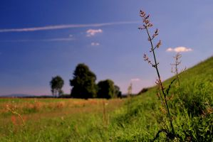 Summertime by pourquoi25