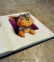 Day 3. Misa the Yorkie by midnightgates