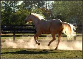 Gallop Through the Dust by Phantom303