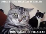 That cat looks like hitler by DemonSpawn12