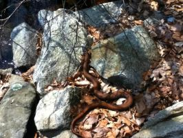 sLiThEr by october84stardust