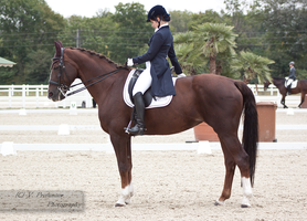 Dressage Cup_6 by CalyHoney