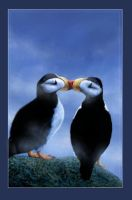 Puffins In Love by oomu