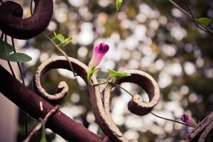 Flower on the fence by DorottyaS