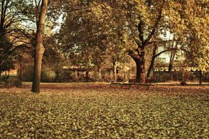 Autumn Leaves Carpet by dardaniM