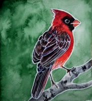 Red Cardinal by Forestia