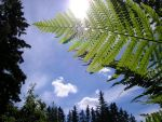 a fern in the sun by s3r4x