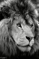 the king in black and white by Yair-Leibovich