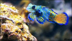 A Parrot of the Sea by woxys