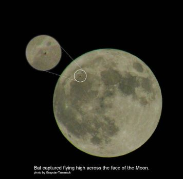 Full Moon Capture - Abq cah 10152016 by Graystar-Tamarack