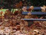 Leaves on the Bench by chetin